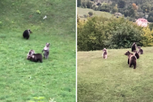 <p>Medvjedi na Velebitu</p>
