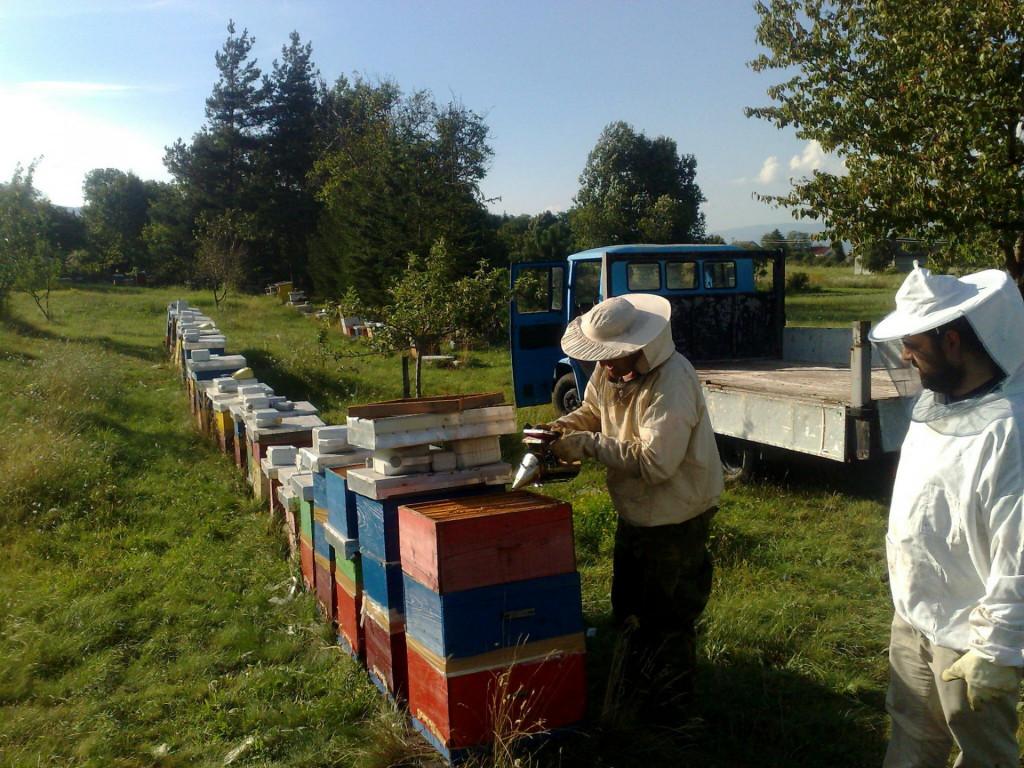 <p>Pčelari (Ilustracija)</p>