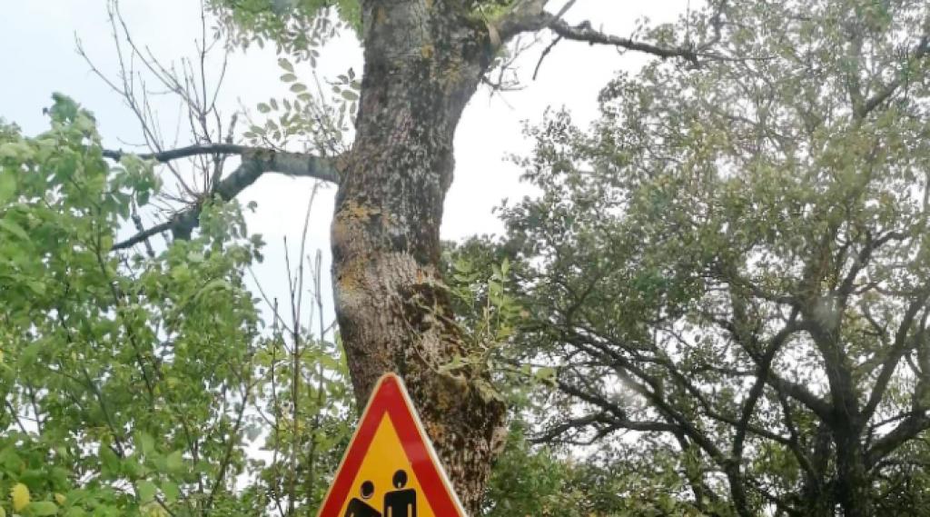 <p>Prometni znak u Dalmaciji</p>
